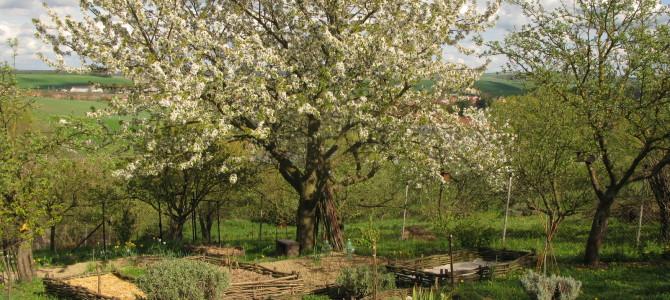 Začátky naší přírodní zahrady