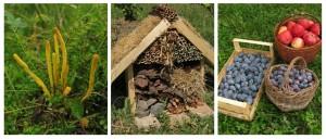 tvorime prirodni zahradu2b
