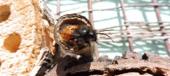 Naše balkónové včelky I – jak to všechno začalo