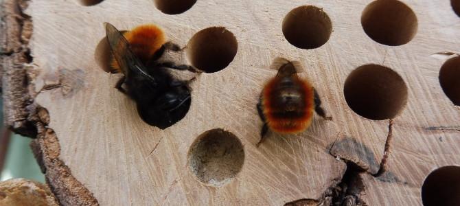 Naše balkónové včelky III – stavba nových hnízd